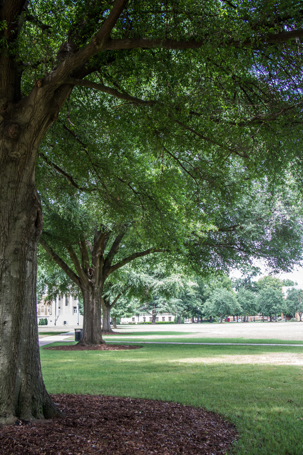 the University's Quad, a large green space at the center of campus.
